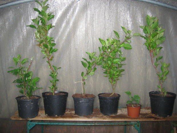 57a0a2d4a155c_crop
